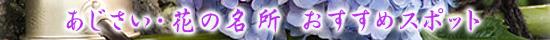 紫陽花の名所・あじさいまつり おすすめイベント情報