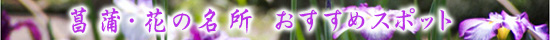 菖蒲の名所・菖蒲祭り おすすめイベント情報