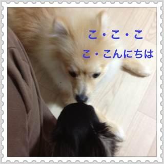 1to_20120725095357.jpg