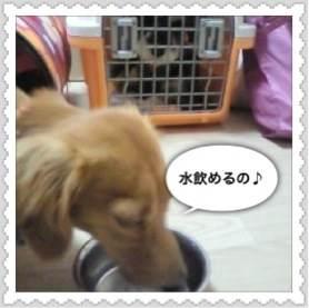 2_20120711100947.jpg