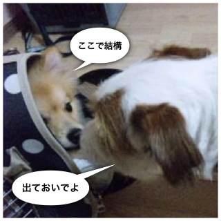 2o_20120804102148.jpg