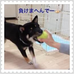 2to_20120516091825.jpg