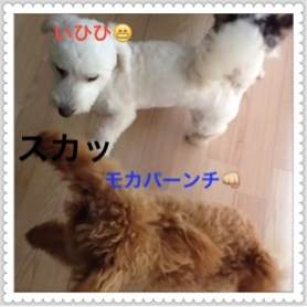 3_20120609093832.jpg