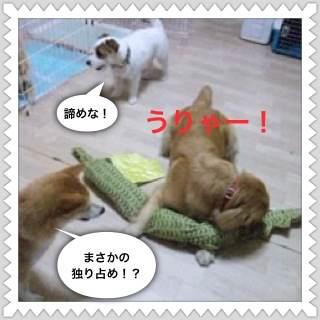 3o_20120804102148.jpg