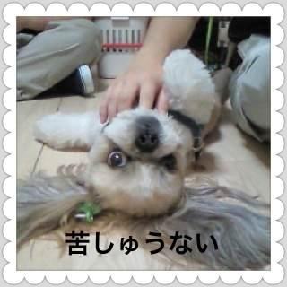 4_20120808094319.jpg