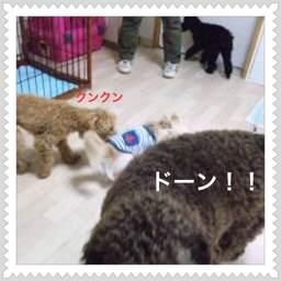 photo3_20120503111535.jpg