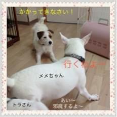 photo_20120407183807.jpg