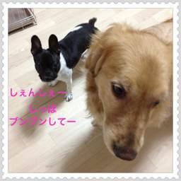 photo_20120503111045.jpg