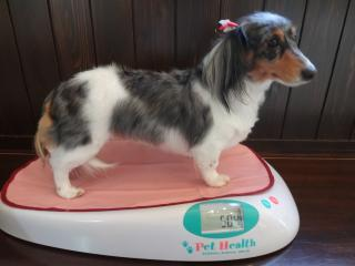 体重測定中!