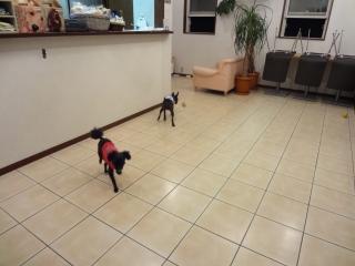 小型中型犬には広々室内ドッグランに♪
