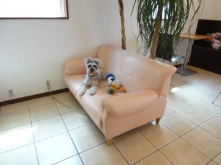 お気に入りのソファーにて♪