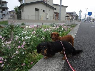 お散歩大好き~♪