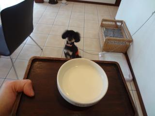 ワンコミルク♪