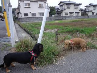 仲良くお散歩♪