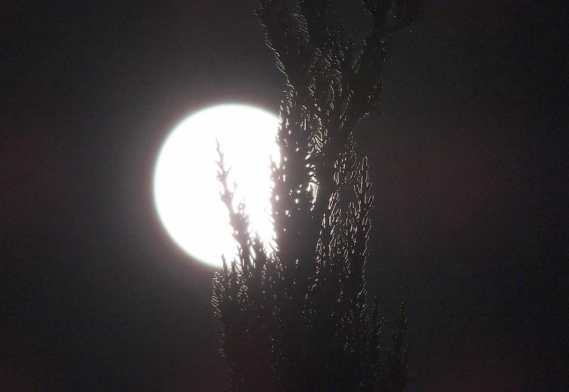 moon1-1.jpg