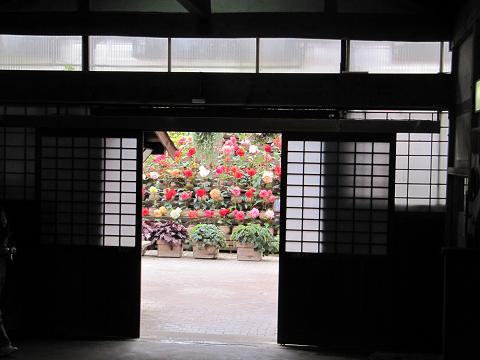 IMG_花鳥園5