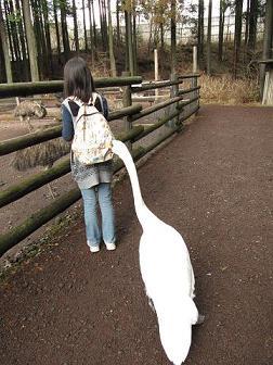 IMG_花鳥園 白鳥3