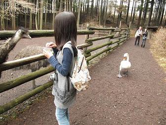 IMG_花鳥園 白鳥7