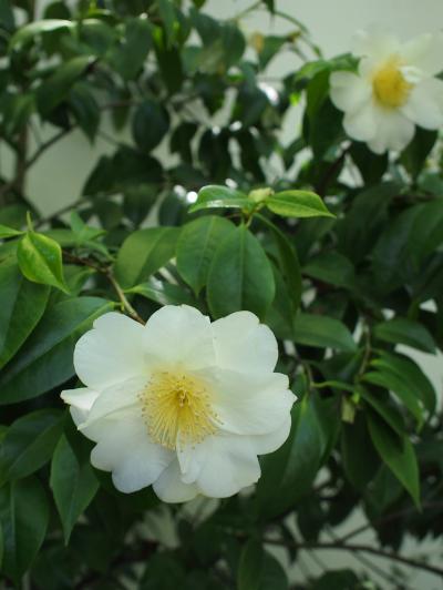 chinese+garden+012_convert_20120513170656.jpg