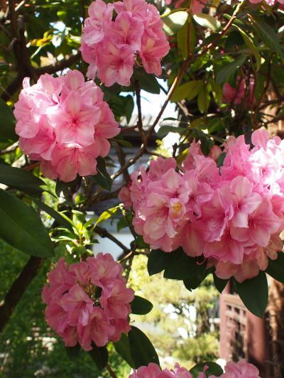 chinese+garden+032_convert_20120513171457.jpg
