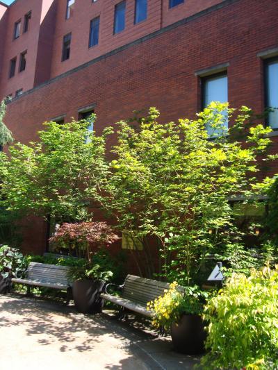 chinese+garden+059_convert_20120529145421.jpg