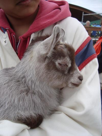 pet+day+12_convert_20120509101629.jpg
