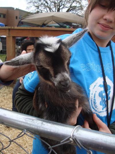 pet+day+13_convert_20120509101808.jpg