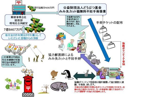 みみ先カット猫無料不妊手術 (3)