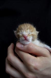 Img41_cat_big[1]