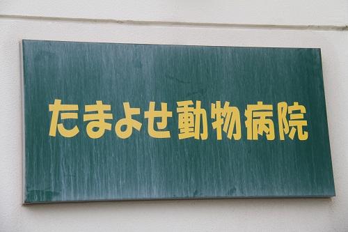 石垣島H2410月 471