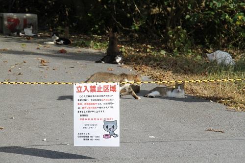 石垣島H2410月 038