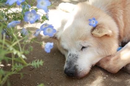 Img369_dog_big_20120926215759.jpg
