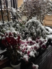 __ 1雪