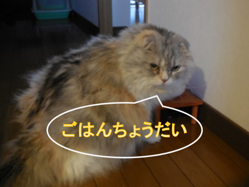 猫がお腹がすいたとき