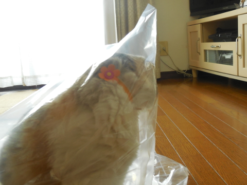 ナビィinビニール袋