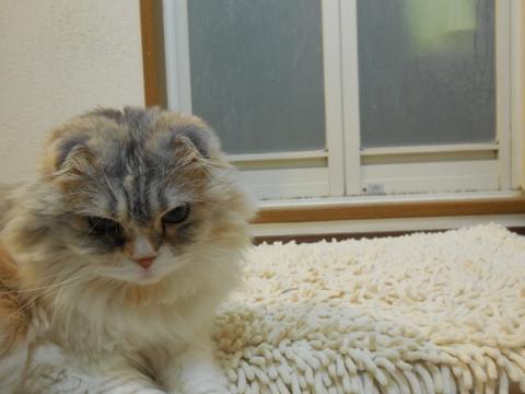 風呂場についてくる猫