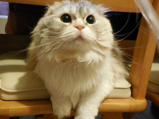 ナビィ(猫)の画像(ひもおっかけ)
