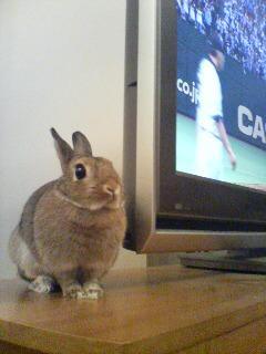 tv-yoko2