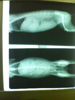 rentogen.jpg