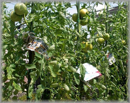 トマト覆い