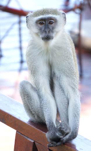 20120319 monky 11cmDSC03112