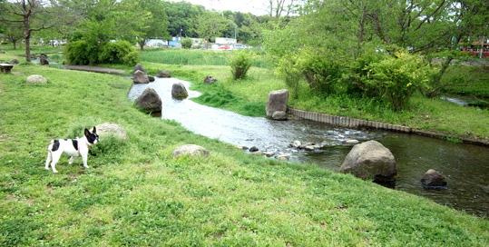 20130419 水辺公園 19cm 10130002