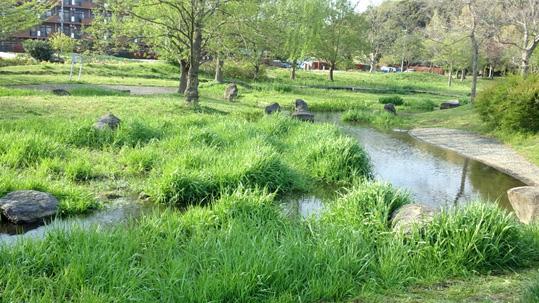 20130412 水辺公園 19cm 16130000