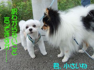DSCF8515_20120618201153.jpg