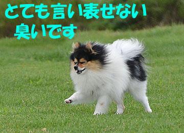 DSC_3232_2.jpg