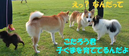 DSC_3533.jpg