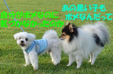 DSC_3537.jpg