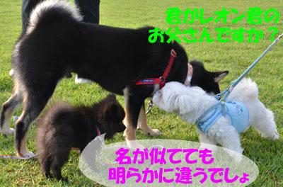 DSC_3538.jpg
