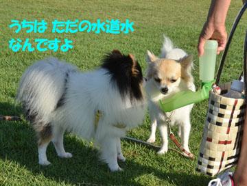 DSC_5383_20120816180036.jpg