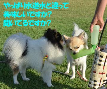 DSC_5384.jpg